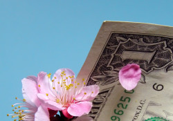 Cherry flowers and petals in a dollar bill cornet